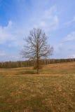 Semplicemente albero Immagini Stock