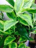 Semplicità e bellezza di una pianta fotografia stock