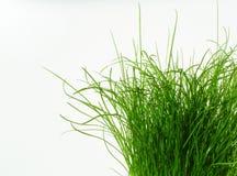 Sempre più verde Fotografie Stock