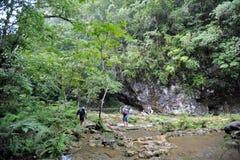 Semuc Champey i Alta Verapaz, Guatemala Royaltyfri Bild