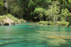 Semuc Champey natural swimming pools, Guatemala royalty free stock image