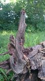 Senão de madeira Foto de Stock Royalty Free