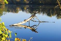 Senão e sua reflexão na água do rio brilhante Imagens de Stock