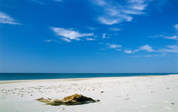 Senão em uma praia Fotografia de Stock Royalty Free