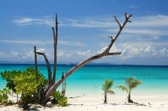 Senões da praia Fotografia de Stock Royalty Free