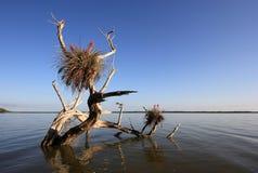 Senões dos manguezais nos marismas parque nacional, Florida imagens de stock