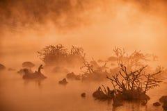 Senões na água do rio na manhã adiantada do inverno fotos de stock royalty free