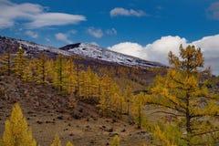 Sen höst i dalarna runt om den norr Chui kanten Arkivfoto