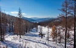 Sen höst i de Altai bergen Arkivbild