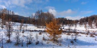 Sen höst i de Altai bergen Royaltyfri Bild