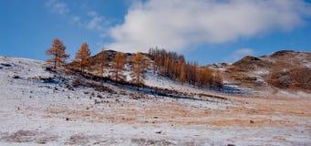 Sen höst i de Altai bergen Arkivfoto