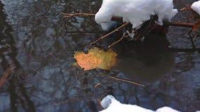 Sen höst Jaga En stupad gul lönnlöv i en ström och den första snön stock video