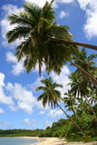 sen na plaży tropikalnym raju Fotografia Royalty Free