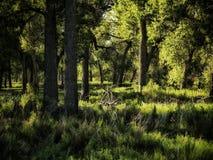 Sen sommar som är scenisk av poppelskog i sydliga Colorado Fotografering för Bildbyråer
