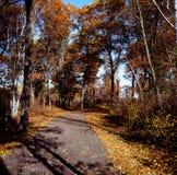 Sena Autumn Leaf Vista - Minnesota Royaltyfria Bilder
