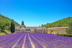 Senanque开花的淡紫色花修道院。 Gordes, Luberon, PR 免版税库存照片