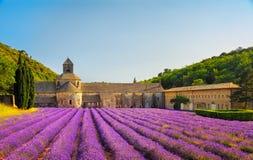 Senanque开花的淡紫色修道院在日落开花 戈尔代, L 免版税库存照片