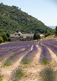Senanque Abbey or Abbaye Notre-Dame de Senanque with lavender field in bloom, Gordes, Provence,. France Royalty Free Stock Photo
