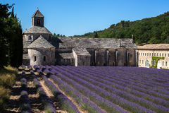 Senanque abbey lavender field Royalty Free Stock Photo