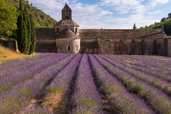 Senanque abbey with a lavender field, Provence Royalty Free Stock Image