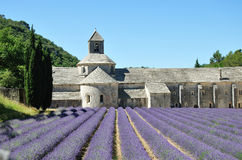 Senanque Abbey with lavender fields  Stock Image