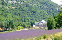 Senanque Abbey with lavender filed Stock Photography