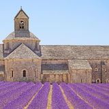 Senanque Abbey lavender flowers. Gordes, Luberon Royalty Free Stock Photos