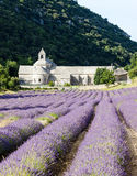 Senanque abbey, Provence. Senanque abbey with lavender field, Provence, France Stock Photography