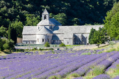 Senanque abbey, Provence Stock Images