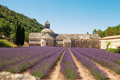 Senanque, Abbey in Provence with blooming rows lavender flowers. Royalty Free Stock Photo