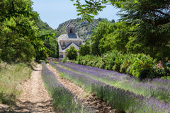 Senanque Abbey Provence France Royaltyfria Bilder