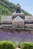 Senanque Abbey Provence France Royaltyfria Foton