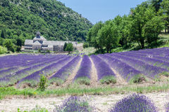 Senanque Abbey Provence France Stock Image