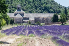 Senanque Abbey Provence France Stock Photography