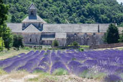 Senanque Abbey Provence France Royalty Free Stock Photos