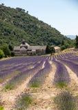 Senanque abbotskloster eller Abbaye Notre-Dame de Senanque med lavendelfältet i blom, Gordes, Provence, Royaltyfri Foto