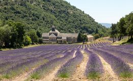 Senanque abbotskloster eller Abbaye Notre-Dame de Senanque med lavendelfältet i blom, Gordes, Provence, Arkivfoton