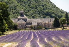 Senanque abbotskloster eller Abbaye Notre-Dame de Senanque med lavendelfältet i blom, Gordes, Provence Fotografering för Bildbyråer