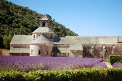 Senanque abbotskloster i Provence med att blomma ror lavendelblommor Arkivbilder