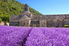 Senanque abbotskloster med härlig lavendel, Provence, Frankrike Arkivfoton