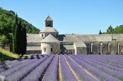 Senanque abbotskloster med lavendelfält Fotografering för Bildbyråer