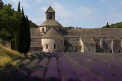 Senanque abbotskloster och lavendelfält, Provence, Frankrike Arkivbilder
