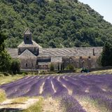 Senanque-Abtei oder Abbaye Notre-Dame de Senanque mit Lavendelfeld in der Blüte, Gordes, Provence Stockfotografie