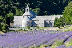 Senanque Abtei, Provence Stockbilder