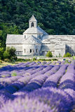 Senanque Abtei, Provence Lizenzfreie Stockbilder