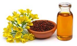 Senapblommor, frö och olja royaltyfri bild