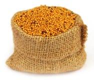Senape dorata in una borsa del sacco Fotografia Stock