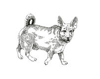 Senceless dog ink drawing graphic. Senceless fat dog ink graphic on white background ugly funny pet Royalty Free Stock Photo