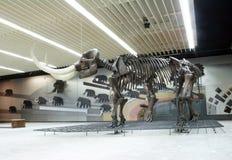 Senckenberg Naturmuseum法兰克福 免版税图库摄影