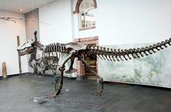 Senckenberg Naturmuseum法兰克福 库存图片